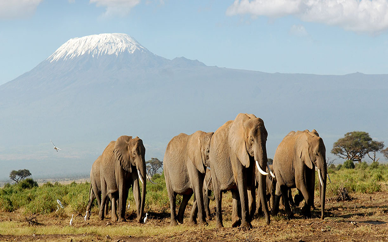 6 DAYS ADVENTURE SAFARIS