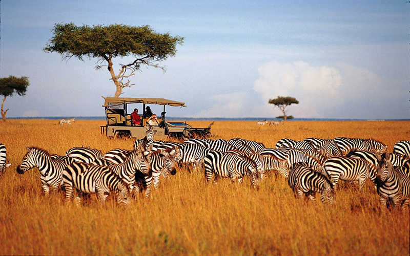 8 DAYS ADVENTURE SAFARIS